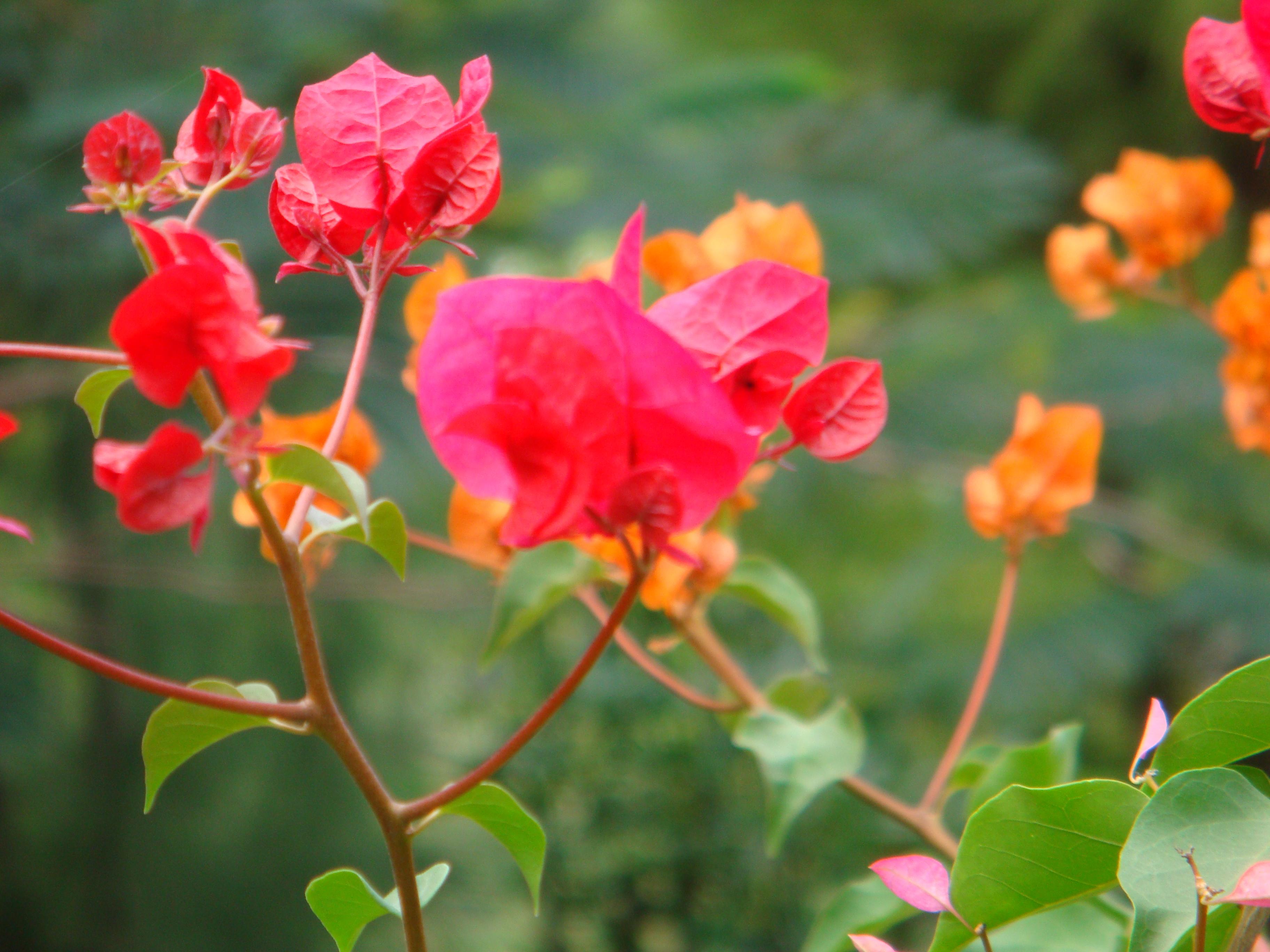 Caribbean Flowers: Things We Don't Normally See « Elissa Elliott